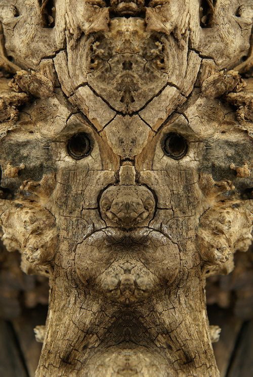 """Italian photographer Elido Turco taking photographs of tree bark and then mirroring the photographs discovered a whole society of """"Dream Creatures"""""""