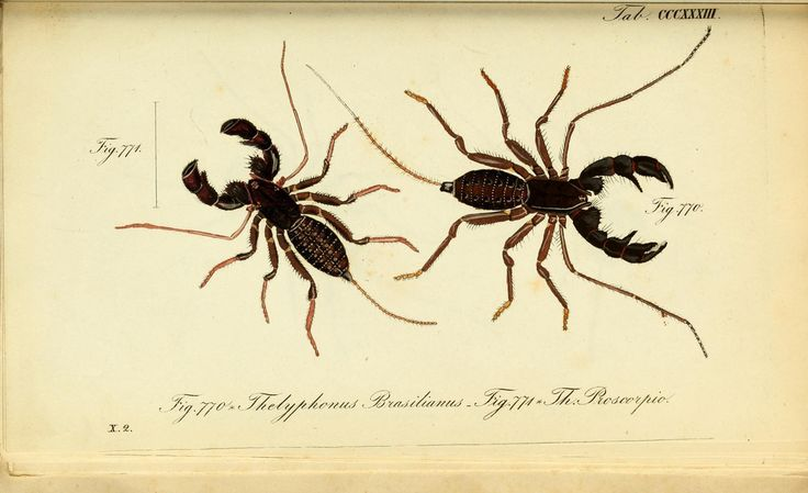 https://www.flickr.com/photos/biodivlibrary/8559406533/sizes/l
