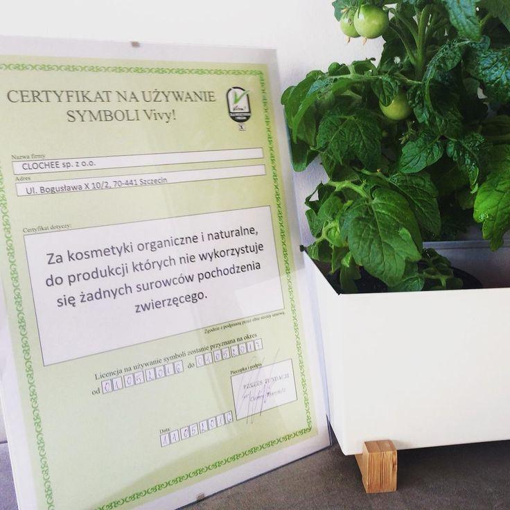 """Jest już z nami! Certyfikat na kolejny rok na używanie symbolu """"V"""" zaświadczający że nasze produkty, są idealne dla wegan i wegetarian, oraz produkowane tylko z surowców roślinnych ☺️ Dziękujemy @fundacjaviva oraz @magazynvege #kosmetykinaturalne #kosmetykiweganskie #wege #wegetarianizm #zyjzdrowo #clochee #certyfikat"""