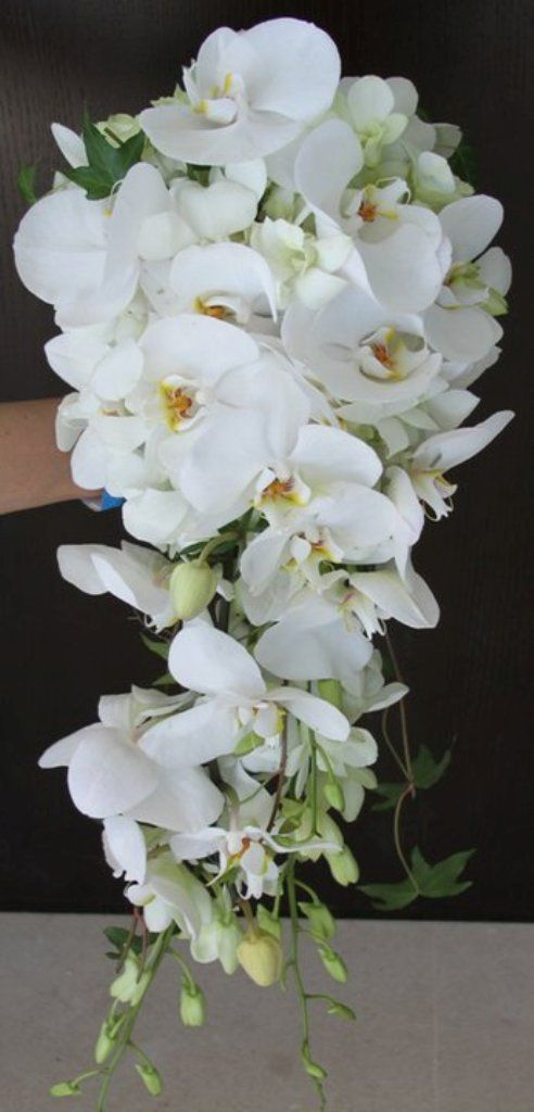 Wedding Bouquet Orchid Ideas : Best ideas about orchid bridal bouquets on