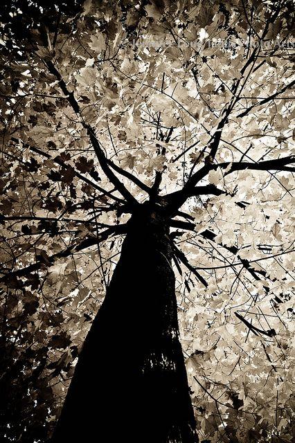 Tree, tree, glorious tree.... https://www.facebook.com/JanusPhotoArts