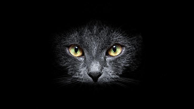 wallpaper black, cat, background, eyes, a look, muzzle, Moustache