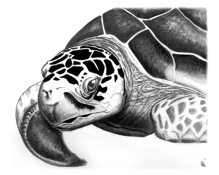 103 best Clip ArtMy Style Turtle Turtle images on Pinterest