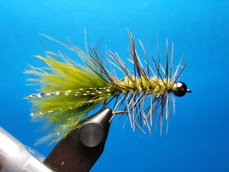 Olive Woolly Bugger w/Emu for the hackle.  Tied by Jim Hershey