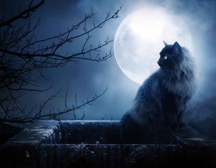 Blue moon   What exactly IS a Blue Moon?   Wax Poetic~Blue Moon Candle's Blog~