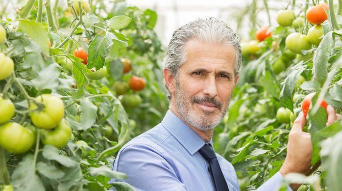 Vedci na pestovanie rajčiakov odporúčajú aspirín