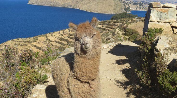 Schattig! Gemaakt door Anne Marie tijdens haar reis door Bolivia en Peru.