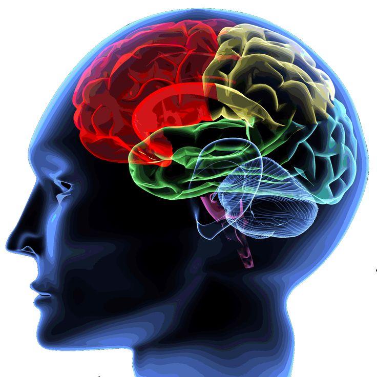 Tłuste Życie : Neurodegeneracja mózgu i depresja