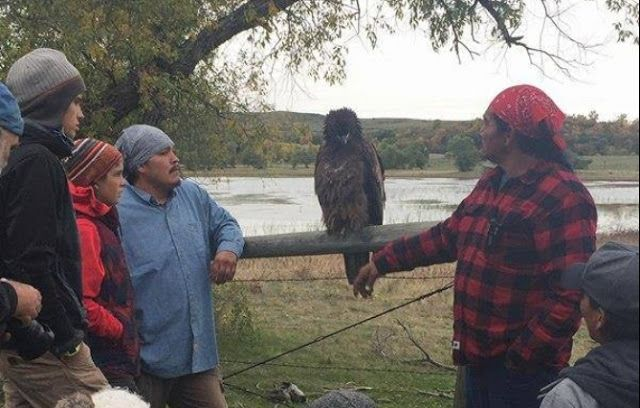 Another Avatar moment at Standing Rock. This is a Golden Eagle that landed for about an hour. Natives gathered around it and were able to touch it.  American Natives see the eagle as a sacred messenger that carries prayers to the Creator and returns with gifts and visions. Freedom is vital to the survival of the eagle and this teaches us that all people must be free to choose their own paths; to ...