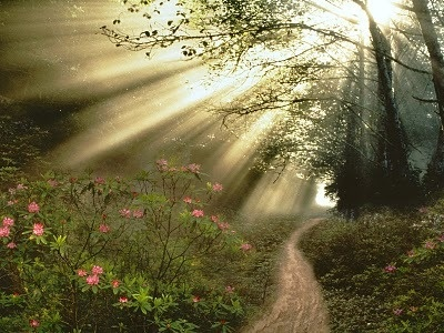 RadianceThe Lord, Forests, Lights, Walks, God, Paths, Sun Ray, National Parks, Sunlight