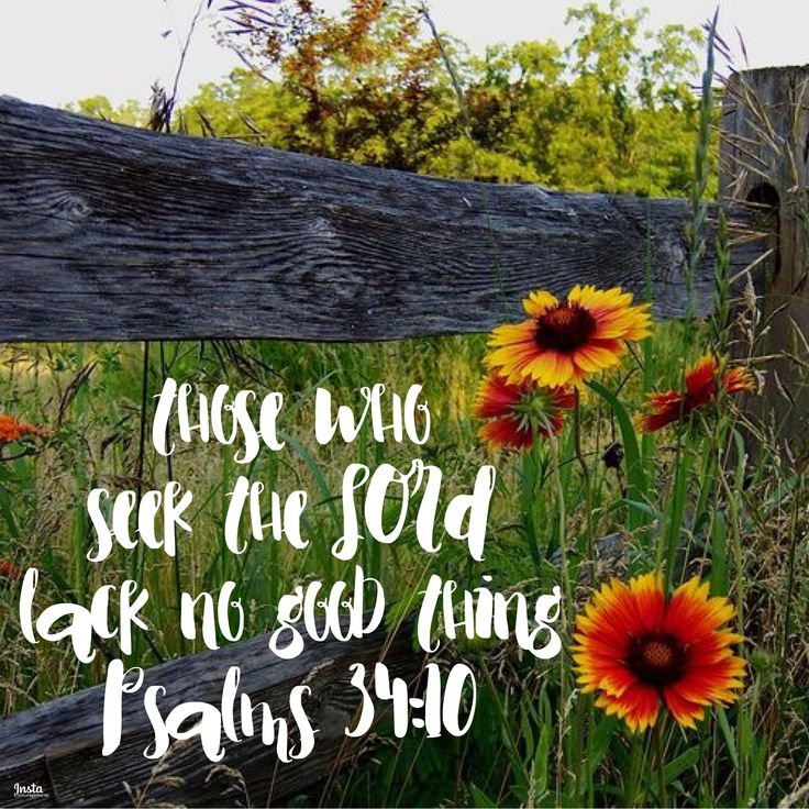 Psalms 34:9-11 Oh, fear the LORD, you his saints, for those who fear him have no lack! The young lions suffer want and hunger; but those who seek the LORD lack no good thing. Come, O children, listen to me; I will teach you the fear of the LORD.  #InstaEncouragements #instagood #wisdomwords #photooftheday #instadaily #MotivationMonday #MondayMedicine