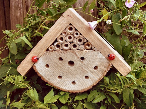 How to make / Where to buy: bug boxes & bee hotels