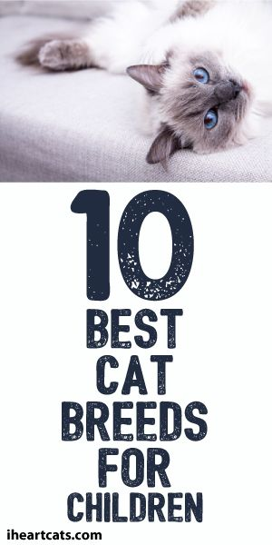 10 Best Cat Breeds For Children