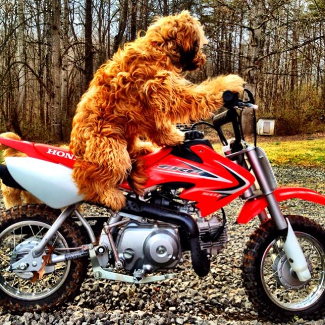 32 Best Dirt Bikes Images On Pinterest Dirt Bikes Biking And