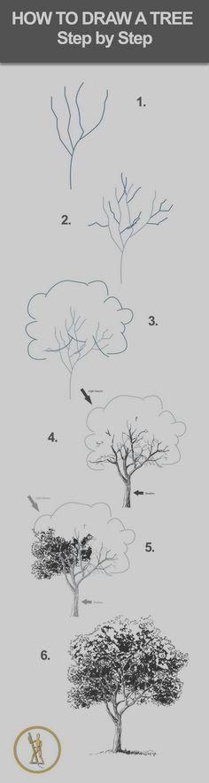 Comment dessiner un arbre (un feuillu) ?
