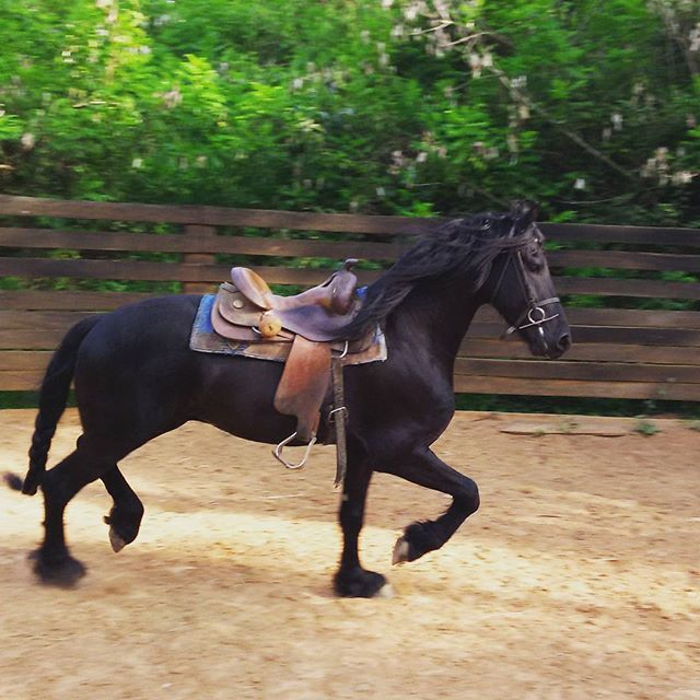 Instagram media by alexmartins_lekinha - FRIESEN !!👏👏😎🐴 Rancho Vitoria @rvguigo #IfThePeopleWilllNeverDependCultureDying #instaCowboy  #OnlyViolaSertanejoCountryFashion  #AboveMeSoGodIsMyHat #Cowboy  #perfection #GrossRusticoSystematic #PassionForAnimals  #cavalos #equinos #caballo #horse #horsesofinstagram #horseriding #horselove #amocavalos #cavalomania #cavaloterapia #cavalgada #rural #fazenda #haras #equitação #paraiso #natureza
