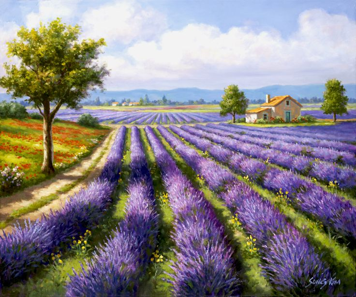 Lavender Rows By Sung Kim