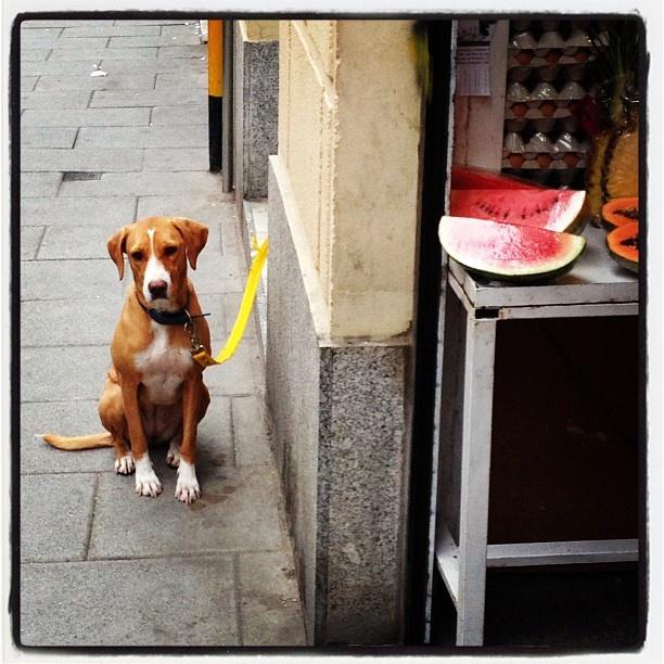 Canes que esperan a sus humanos...