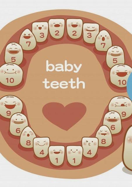 Los dientes de los niños por orden de salida.