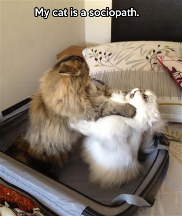 Funny Pictures Of The Day  - the look on the white cat's face made me crack up