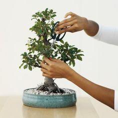 as 25 melhores ideias de avocado plant no pinterest. Black Bedroom Furniture Sets. Home Design Ideas