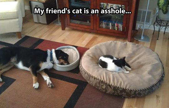 Further proof cats are jerks…