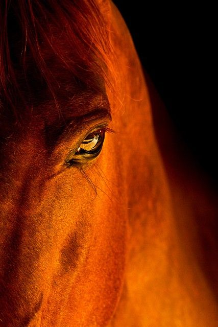 Magic, Horses, Beautiful Hors, Copper, Colors, Hors Photography, Beautiful Creatures, Eye, Animal