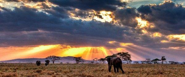 Le parc national du Serengeti