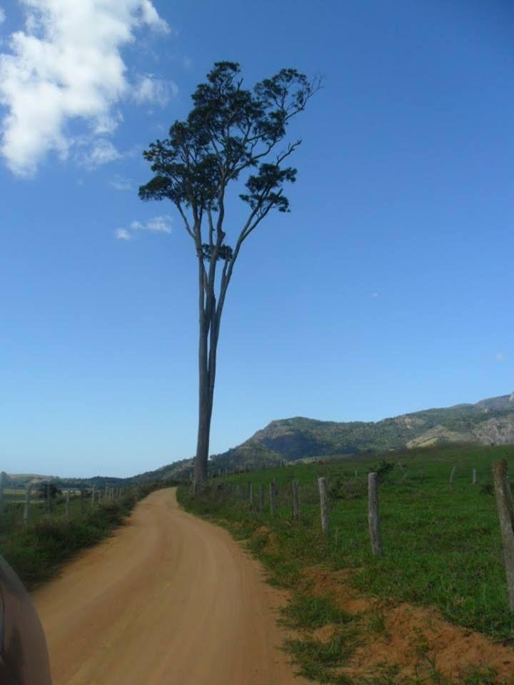 Árvore solitária.