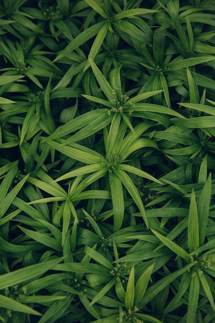 1141 besten greens bilder auf pinterest gärten und klimaanlagen
