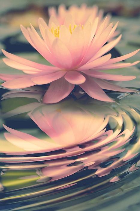 ^Lotus