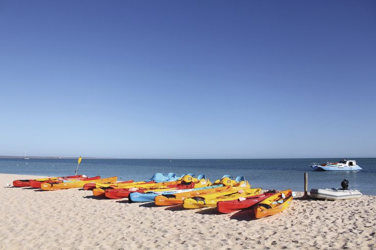 kayaking canoeing while holidaying in Newcastle area. http://www.ozehols.com.au/blog/new-south-wales/newcastle-motels-or-one-of-the-caravan-parks-in-newcastle-to-embark-on-your-newcastle-holiday/ #newcastle #visitnewcastle #triptonewcastle