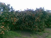 Pick Your Own - Hawkesbury Harvest