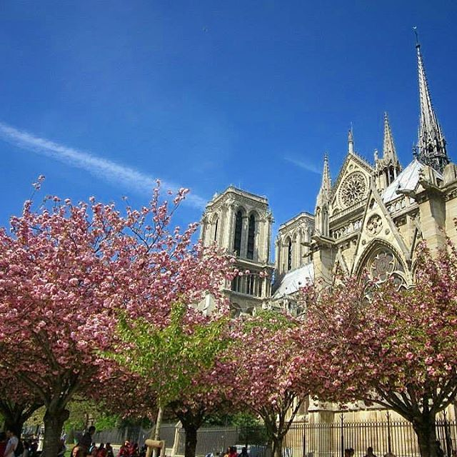 🇫🇷Nothing but blue skies 💙💙💙💙 #april #spring  #paris #visitparis #instaparis #instafrance  #throwback #visitfrance #afternoonstroll #beautiful #picturesque #superb #magnifique #spectacular #instagood #instatravel #instaholiday #instamoment #vacation #travel #explore #live #love #melbournelifelovetravel #loveit #thatview #takemeback  #scenery #cherryblossoms #notredame