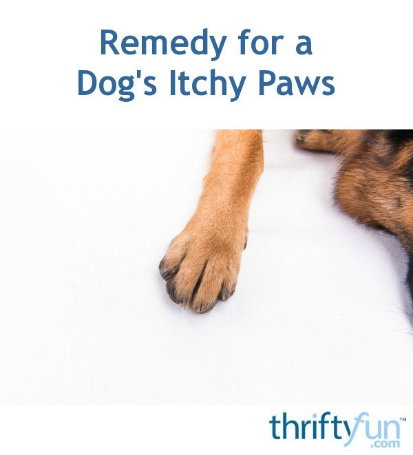 Remedy For A Dog S Itchy Paws Dog Allergies Remedies Dry Skin Treatment Dry Skin On Feet