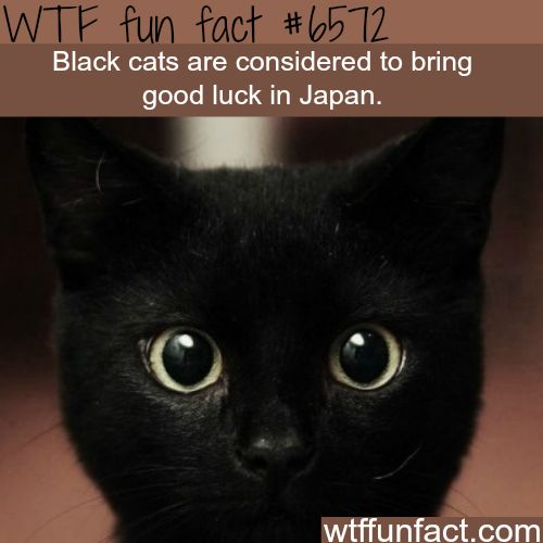Black cats in Japan - WTF fun facts