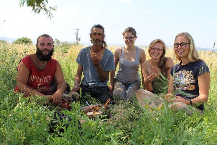 Wwoofen in Israel: Feldarbeit und neue Freunde in Hokuk am See Genezareth