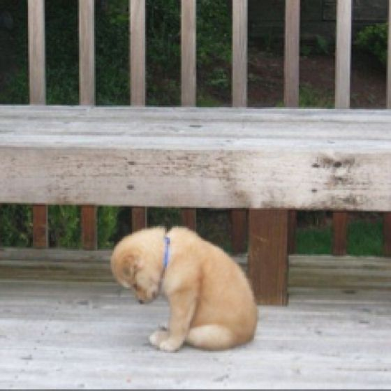 wonder what he is thinking...: Little Puppies, Animal Humor, Dogs Cat, Stupid Cat, Double Standards, Dogs Pictures, Baby Puppies, Little Dogs, So Sad