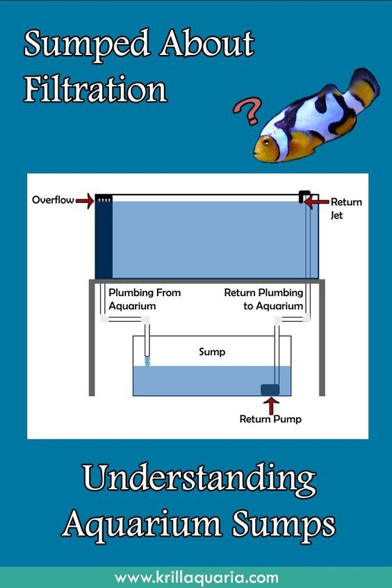 Confused by aquarium sump filtration? Read our article to discover the benefits of saltwater aquarium sumps and how they function towards a pristine aquatic system.