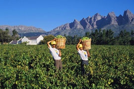 Wellington - 45 minutes from Cape Town CBD - Boland or Cape Winelands region