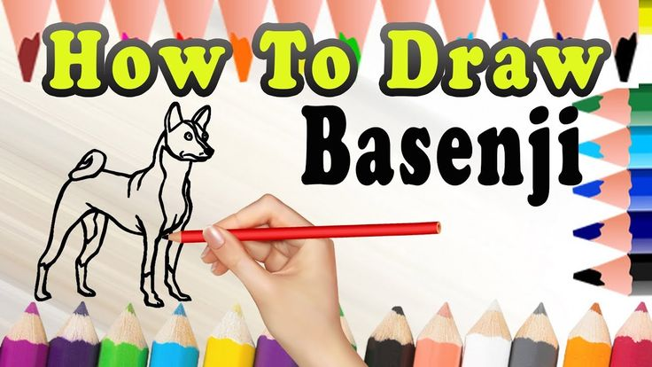 How To Draw A Dog Basenji | Easy dog drawing Tutorial | Draw Easy For Kids