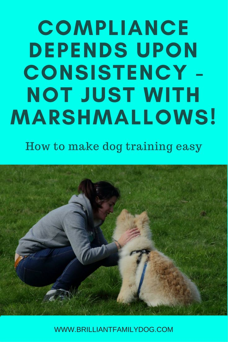 Dog training with consistency will build a strong bond with your pet