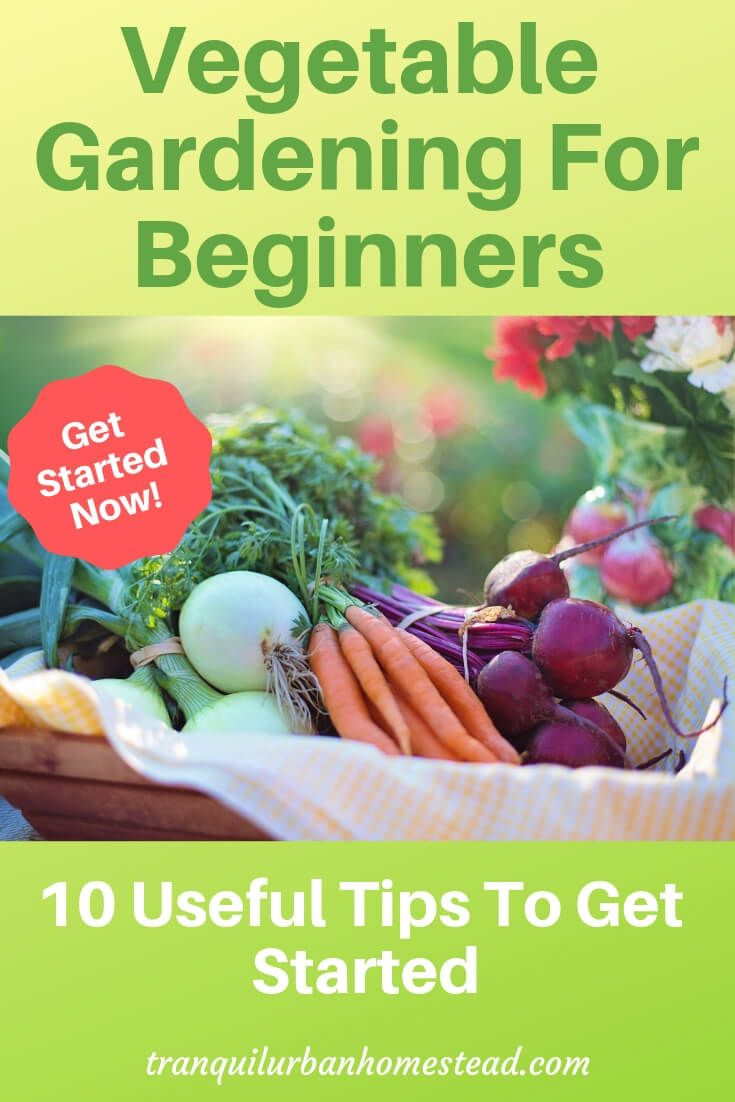 Vegetable Gardening For Beginners 10 Useful Tips To Get Started