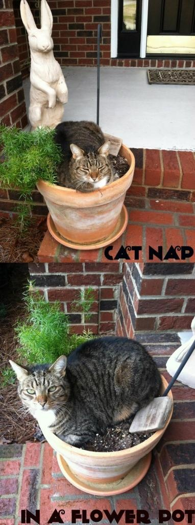 Cat Nap...In a Flower Pot:  Where does your cat nap?
