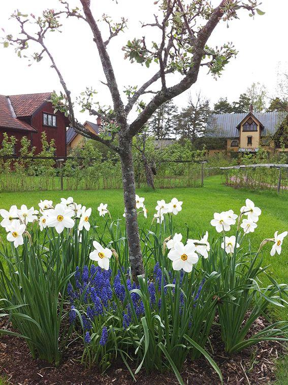 Trädgårdar i Dalarna - Zorngården