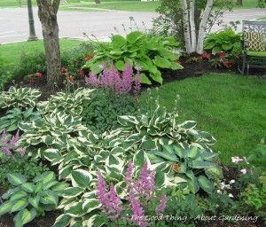 1000 Images About Gardening Hosta Fern Love On