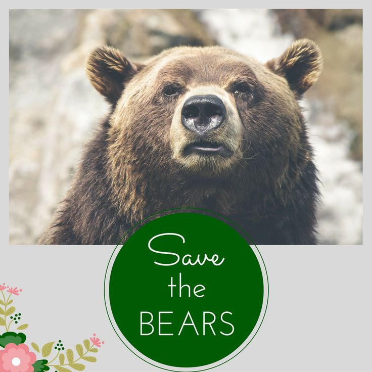 Wild Gems: Bears need our help! Please read.