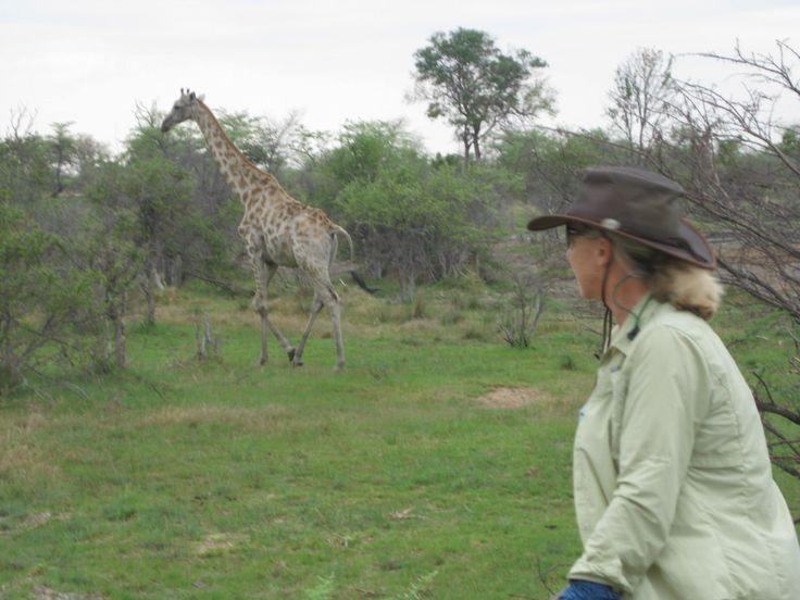 Enjoying the giraffes after our canter together