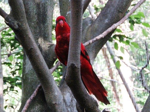 Animales Vertebrados: Peces, Anfibios, Reptiles, Aves y Mamíferos - ElBlogVerde.com