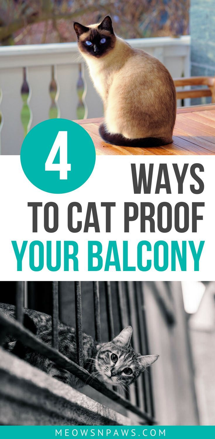 How To Cat Proof A Balcony 4 Solutions To Consider Meows N